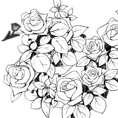 庭園の薔薇
